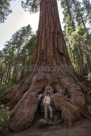 frau steht am fuss eines mammutbaumes