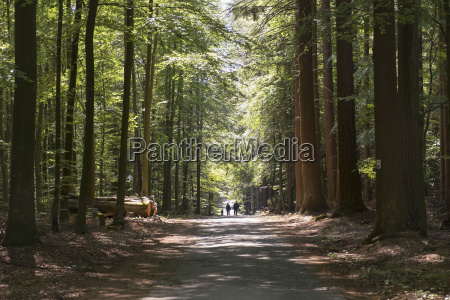forest path in the mixed forest