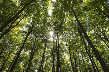 buchenwald kreuzbuckel natural forest reserve near