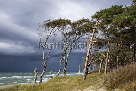 west beach and darsser ort forest