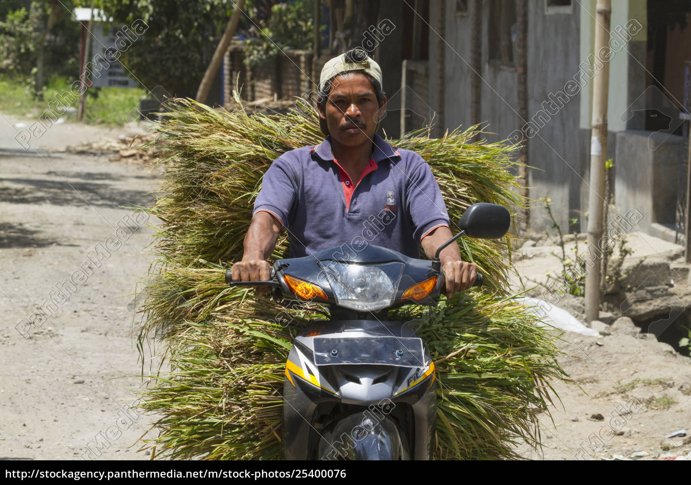 man, on, a, motorcycle, carrying, grass, semparu, lombok, west - 25400076
