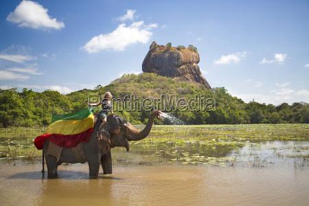 a woman on a sri lankan