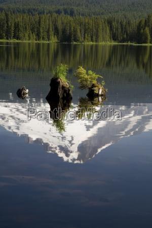 reflection of mt hood in trillium