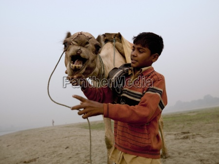 agra indiayoung boy with camel