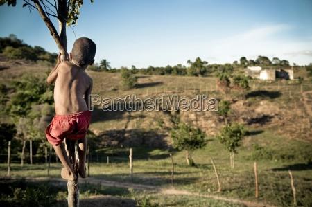 young boy climbing small tree brazil
