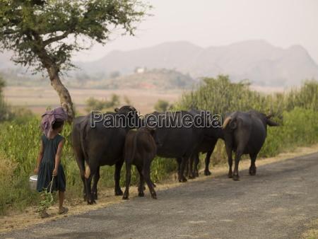 young girl walking behind herd of