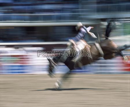 saddleback rider calgary stampede calgary alberta