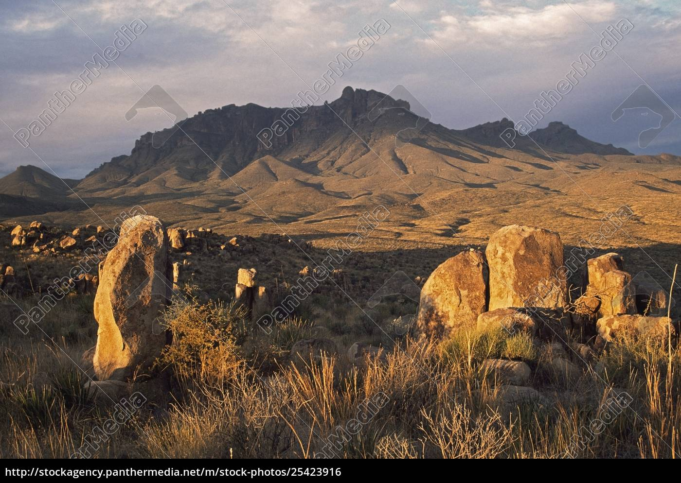 chiisos, mountains, chihuahuan, desert, plants, texas, usa - 25423916