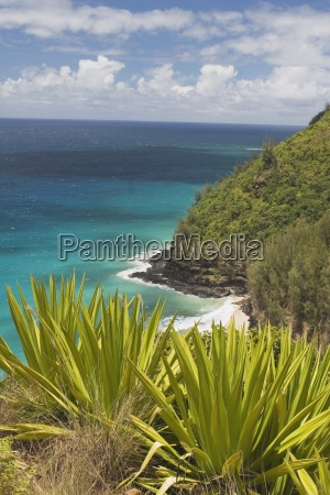 tropical plants and the pacific ocean