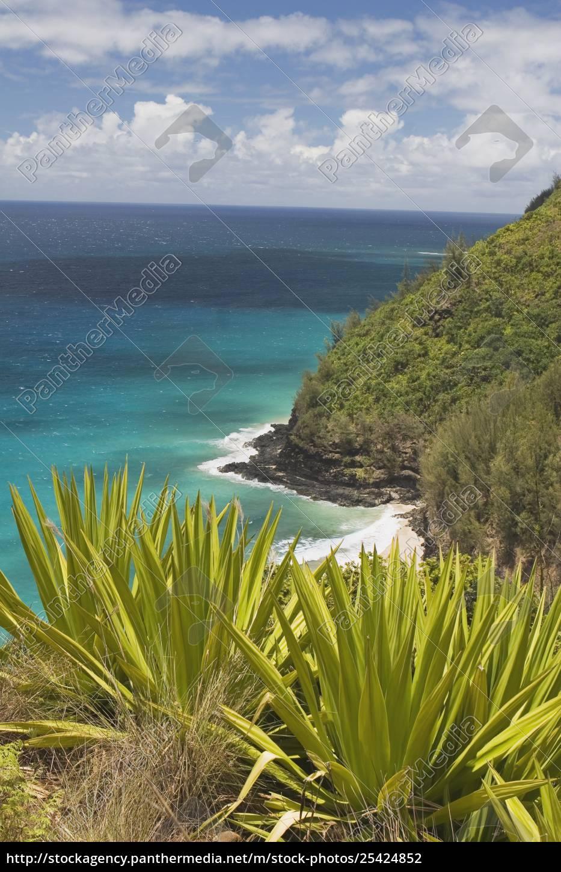tropische, pflanzen, und, der, pazifische, ozean, nordkkauai, hawaii - 25424852