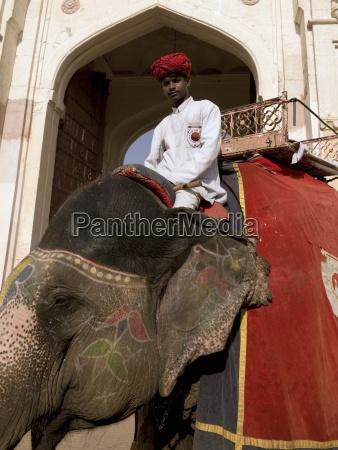 elephant jockey in india amber fort