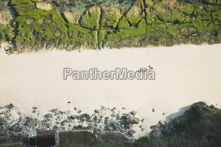 carrageen seetang ernte bukit peninsula bali