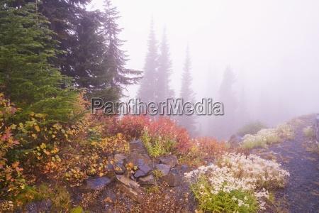 mt rainier national park washington united