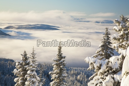 baum baeume berge winter wolke usa