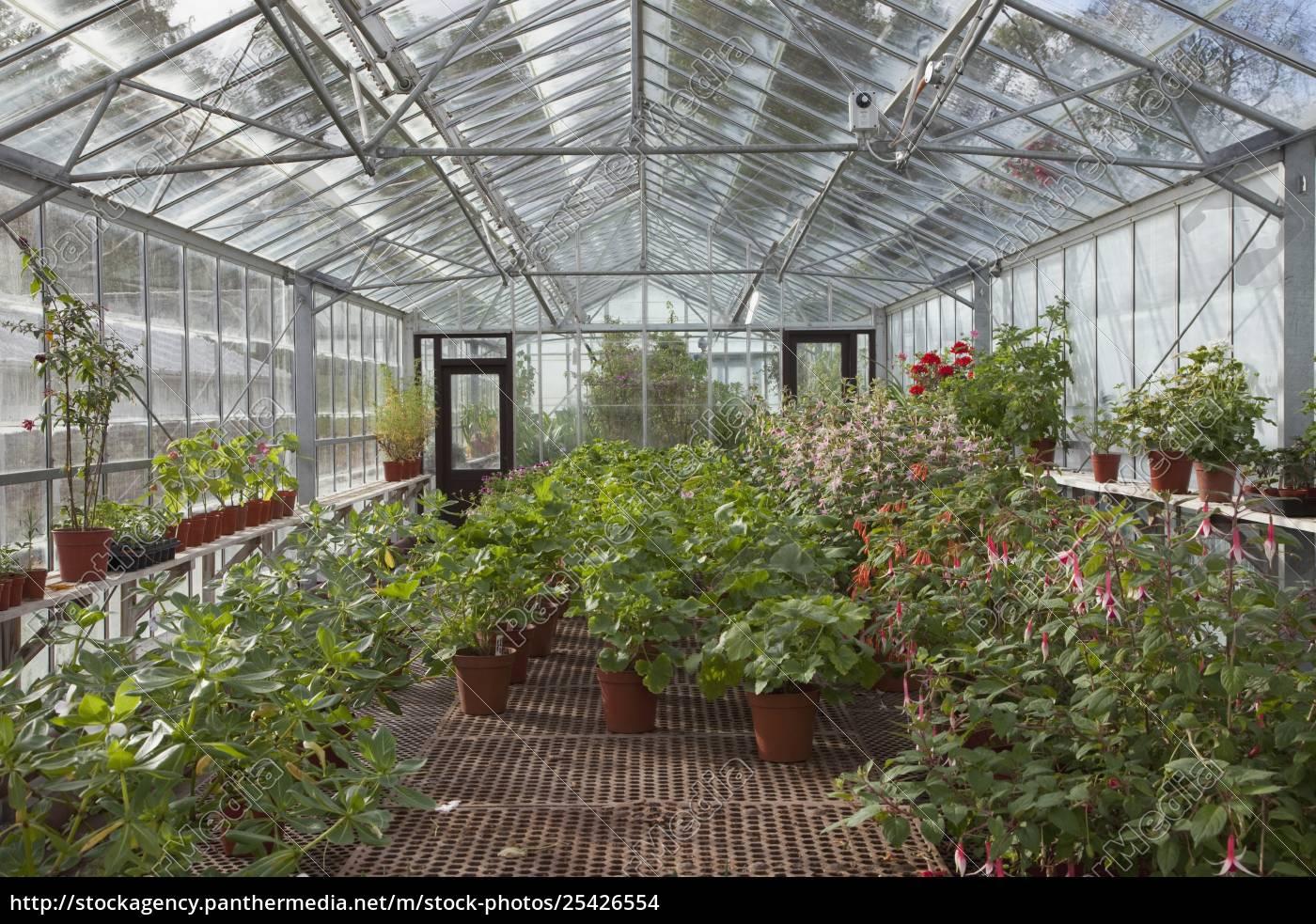 ein, gewächshaus, mit, topfpflanzen - 25426554
