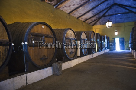 wine barrels in a winery peso