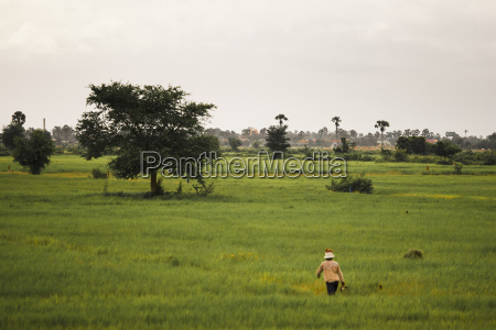 a cambodian woman in a rice