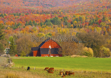 red barn surrounded by autumn colours
