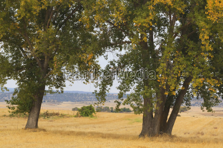 landscape with trees in fields carboneras