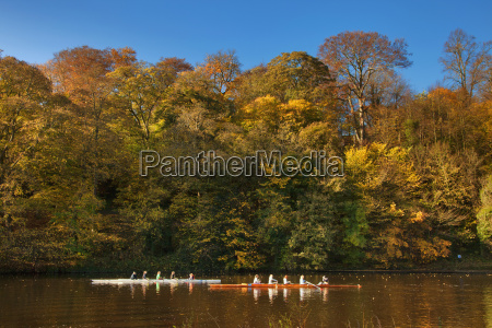 rowers in boats travelling down a