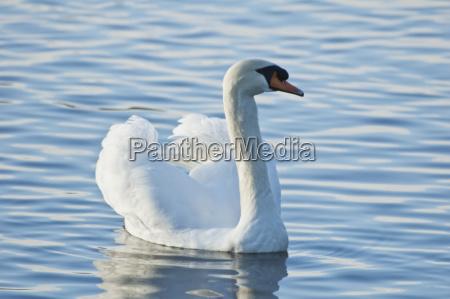 fahrt reisen beruehmt park vogel fauna