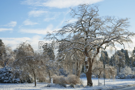 snow covered tree in stanley park