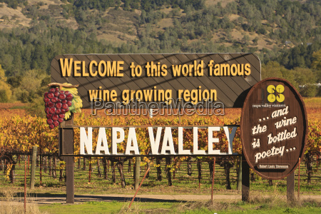 napa valley vineyard in autumn california