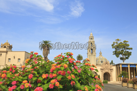 flowering bushes and buildings at the