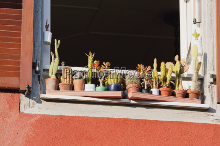 cactus plants on a window sill