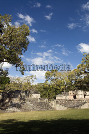 dettaglio storico monumento culturalmente cultura albero