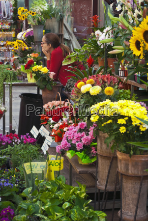 spain catalonia colorful flowers for sale