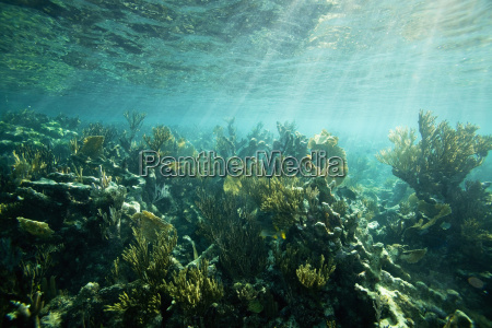 seaweed and plants on the ocean