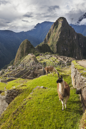peak of huaynapicchu young mountain at