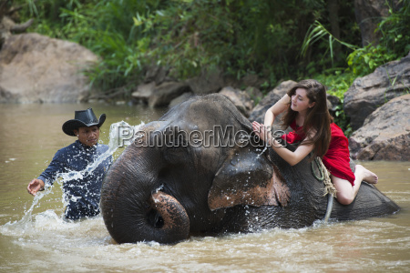 girl washing an elephant in the