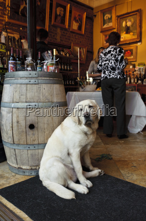 a dog sits in the doorway
