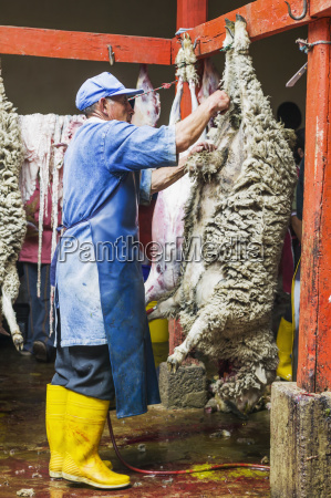 butcher preparing sheep to sell at