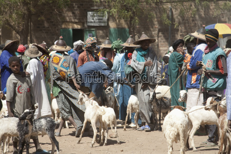 livestock for sale at monday market