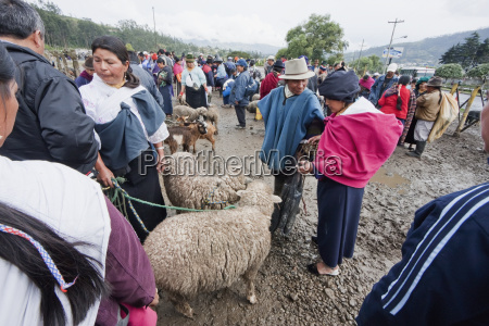 people selling and buying sheep at
