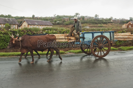 bullock car carrying wood on the