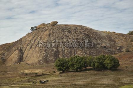 savanna auf dem weg zwischen ranohira