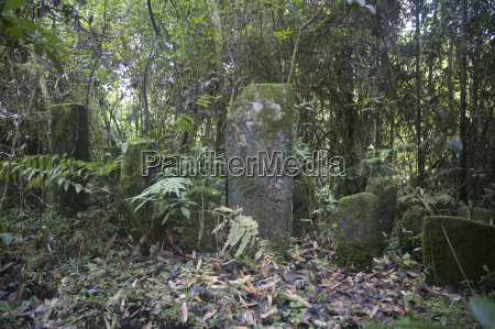 tropischer regenwald ranomafana nationalpark provinz fianarantsoa