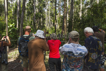 fauna asien tiere indonesien borneo saeugetiere
