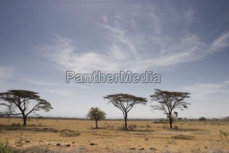 aethiopien szenic view of lone trees