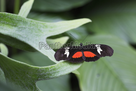 close up of a butterfly on