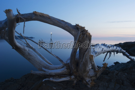 view through driftwood at sunrise over