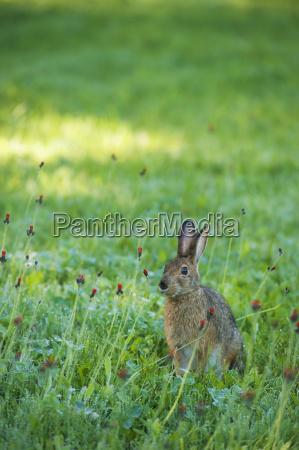 wild hare sitting in a wilderness