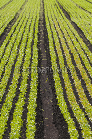 bestellen ordern landwirtschaftlich farbe boden erdboden