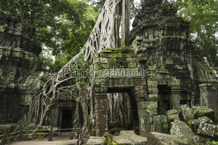 ta prohm impressive temple in angkor