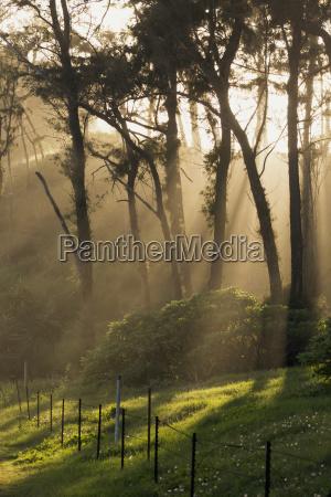 sunbeams through trees to lush grass