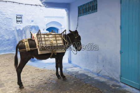 mule waiting patiently in the street